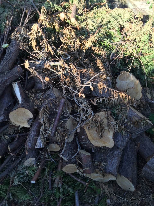 EN4 rubbish collection New Barnet